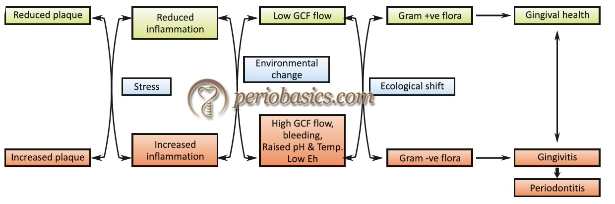 The ecological plaque hypothesis proposed by Marsh, demonstrating changes in the subgingival environment resulting in ecological shift and thus causing periodontal disease progression.