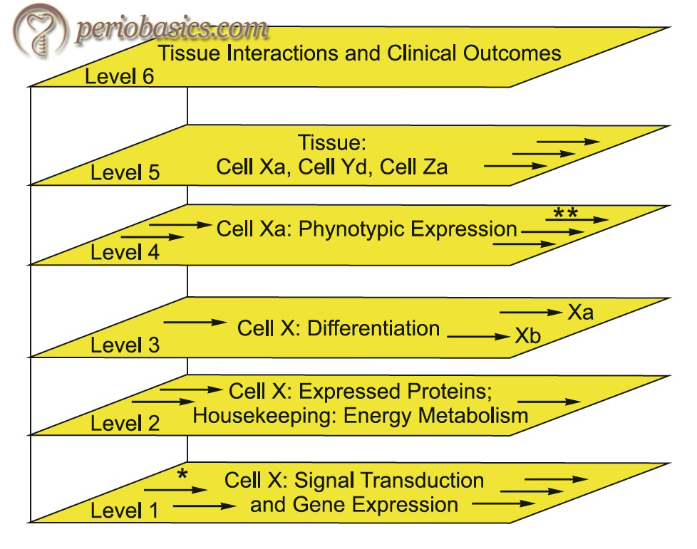 The multilevel hierarchical model of periodontal disease progression proposed by Kornman (2008)