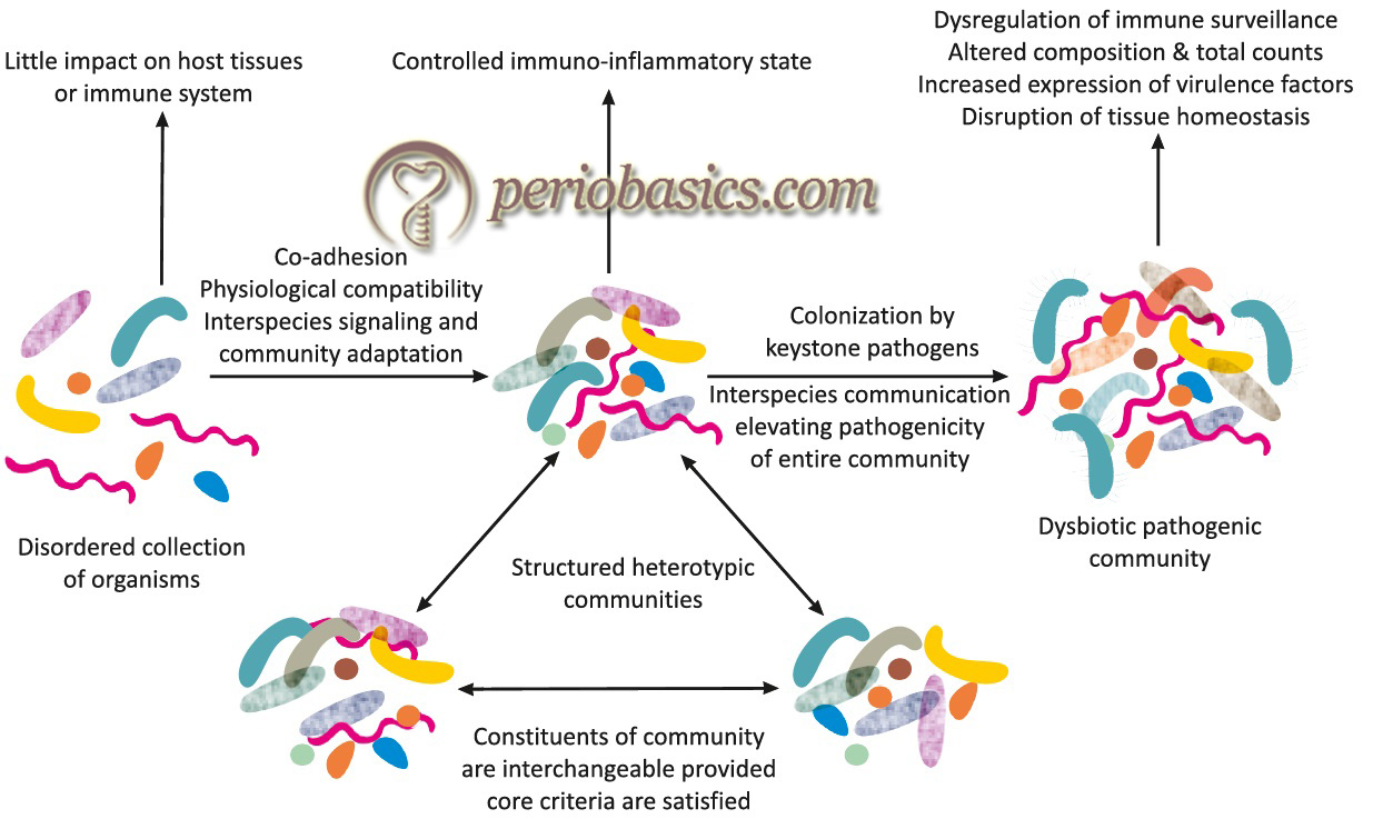 The polymicrobial synergy and dysbiosis (PSD) model of periodontal disease etiology by Hajishengallis and Lamont (2012)