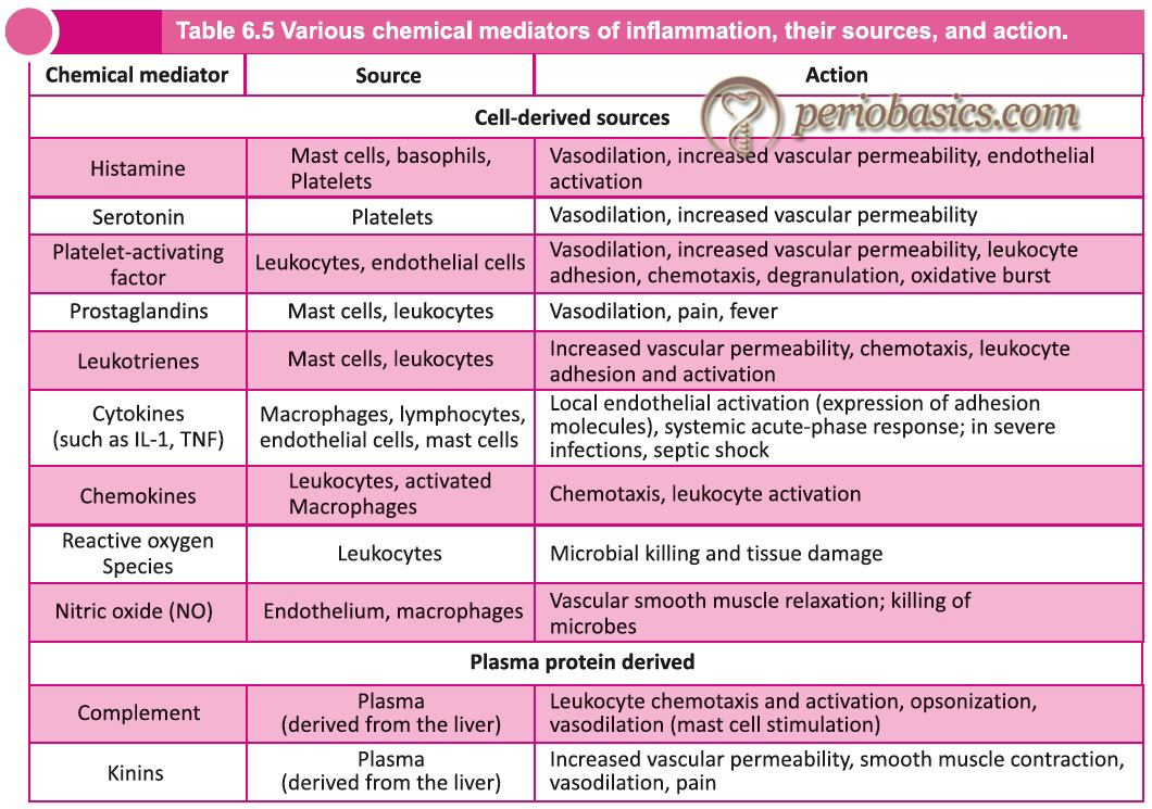 Various chemical mediators of inflammation, their sources, and action.