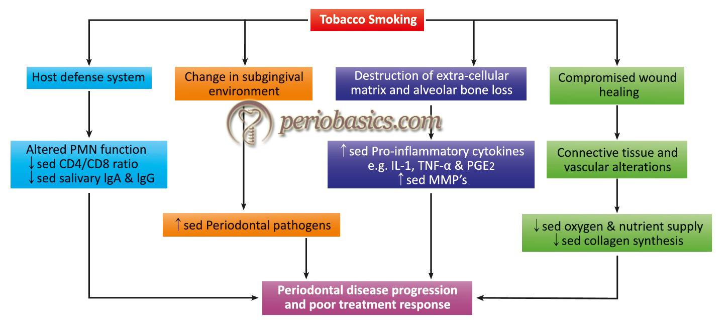 Flowchart describing the effects of smoking on the host defence system, changes in the subgingival environment, and wound healing.