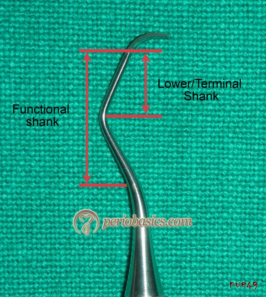Functional and terminal shank