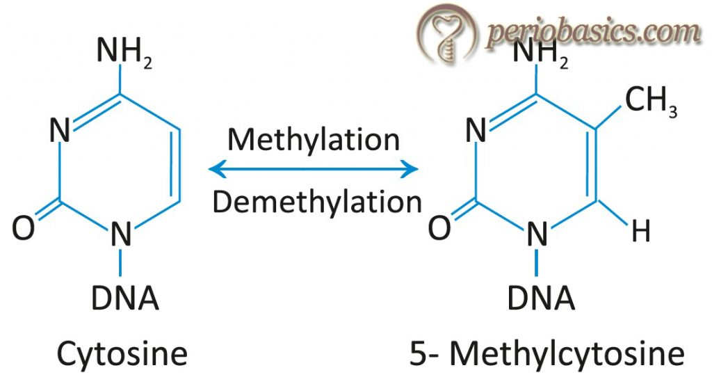 The reaction involved in DNA methylation.