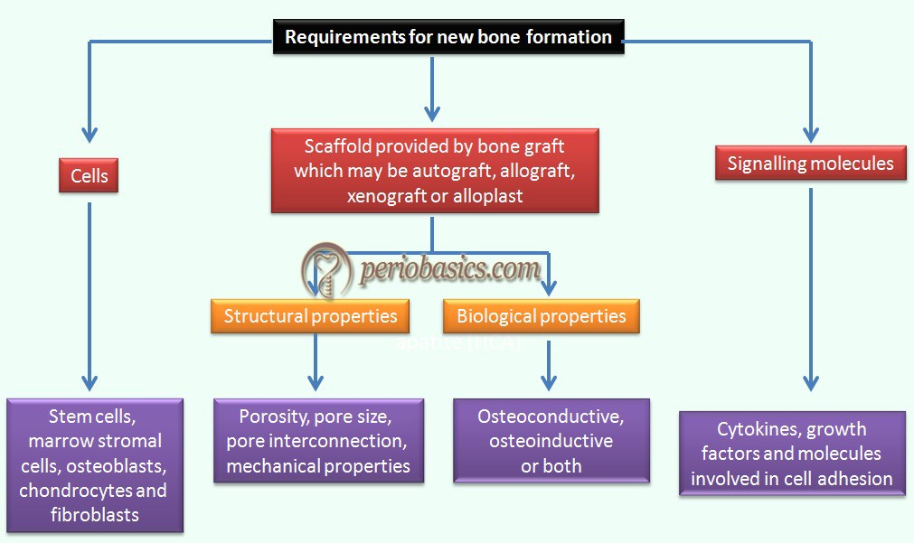 Requirments for new bone formation
